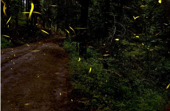 How To Attract Fireflies Gobillybird Com Your Backyard Bird Feeding Expert